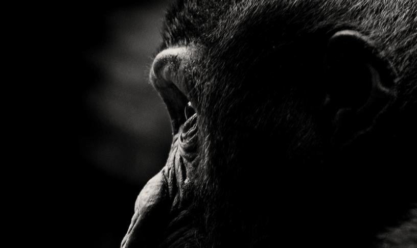 A Hipótese da Ressonância Mórfica e a Teoria do Centésimo Macaco
